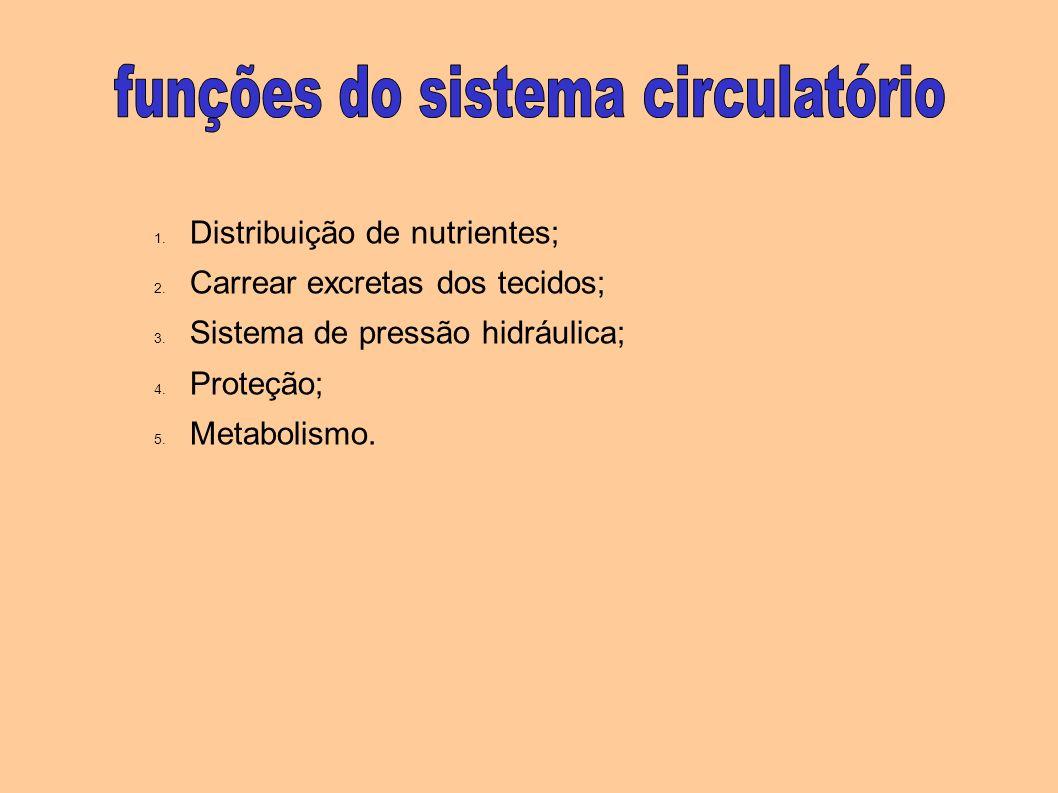 funções do sistema circulatório