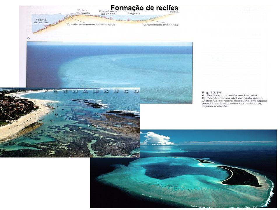 Formação de recifes