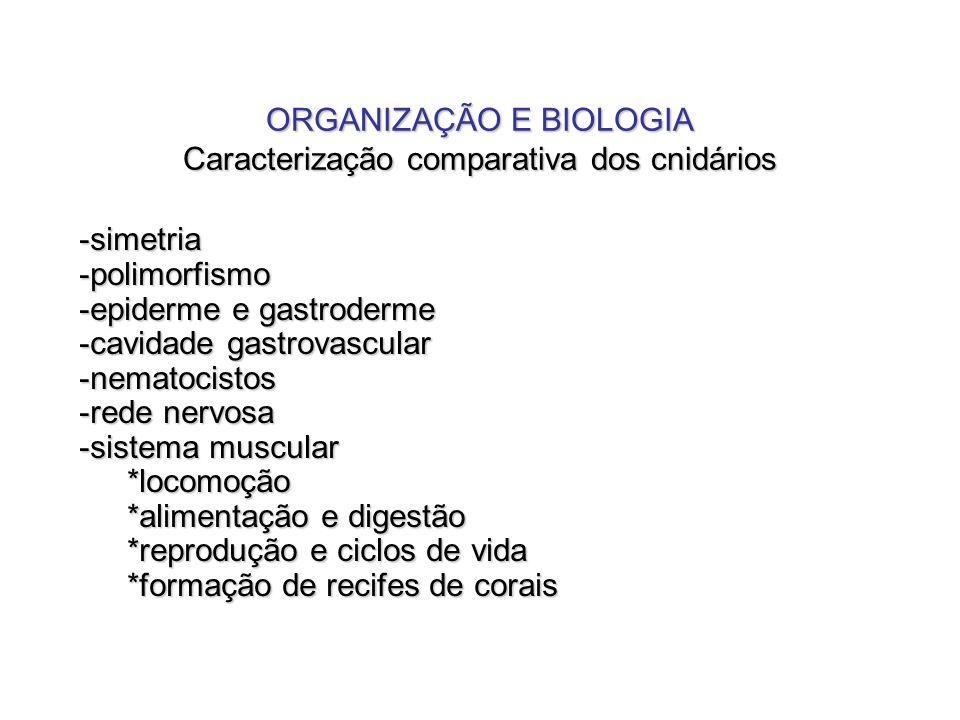 ORGANIZAÇÃO E BIOLOGIA Caracterização comparativa dos cnidários