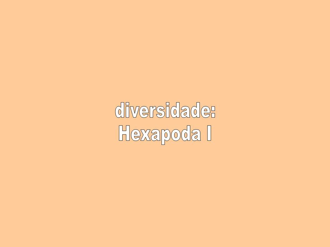 diversidade: Hexapoda I