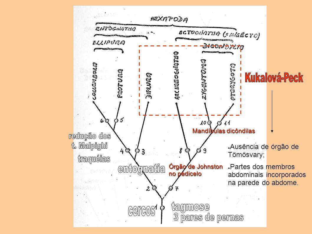 entognatia tagmose Kukalová-Peck Ausência de órgão de Tömösvary;