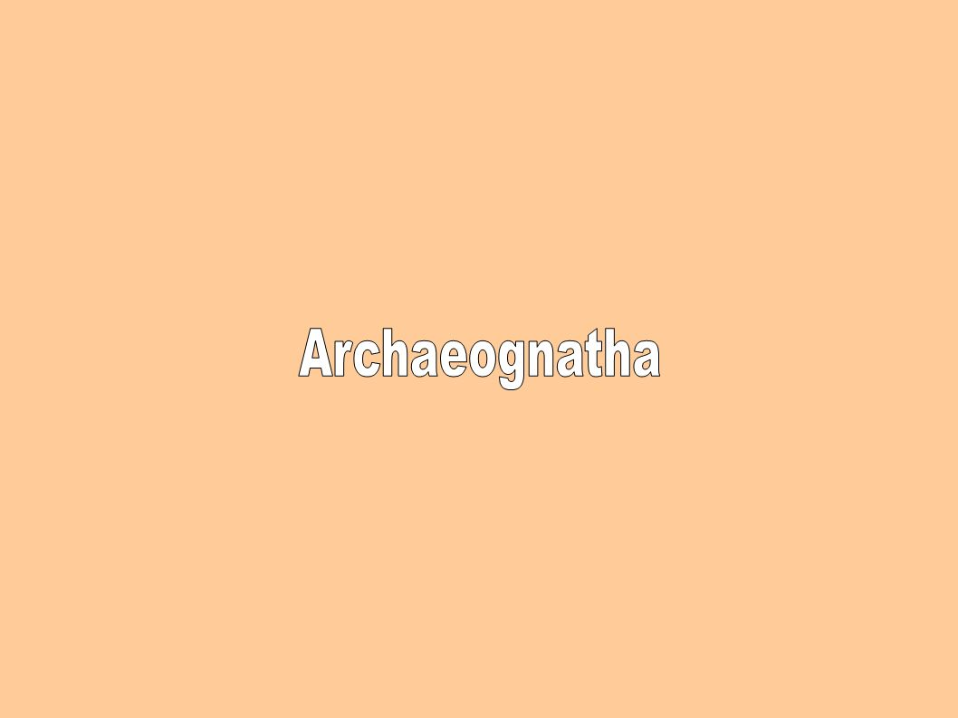 Archaeognatha