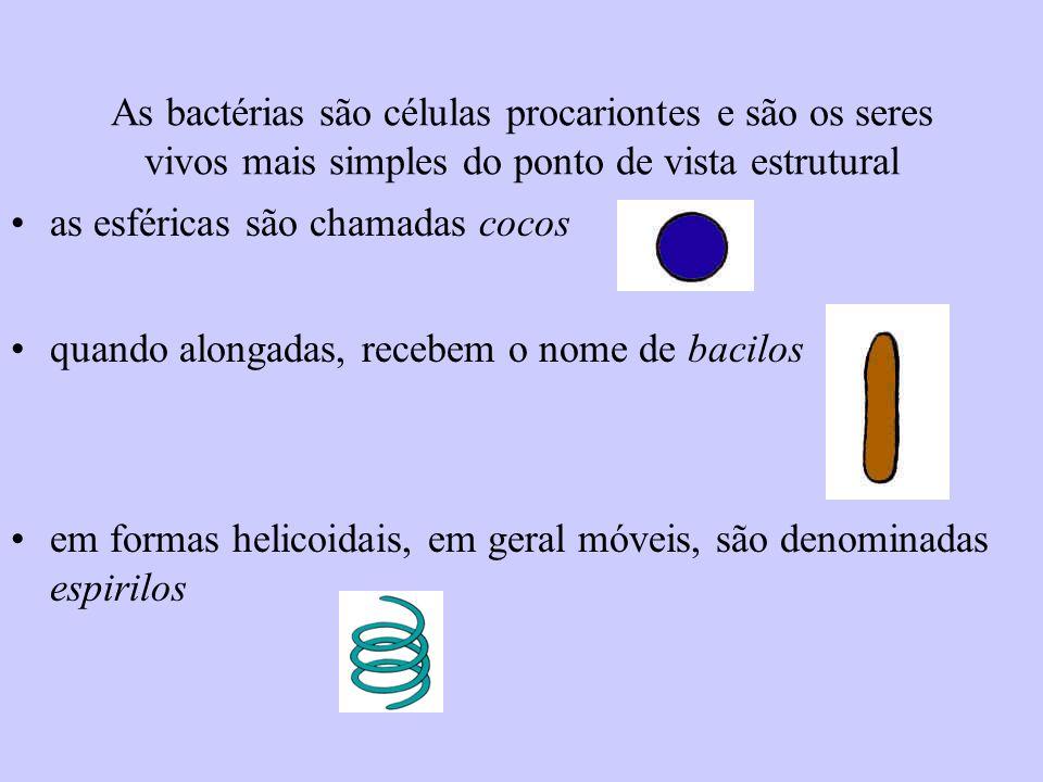 As bactérias são células procariontes e são os seres vivos mais simples do ponto de vista estrutural