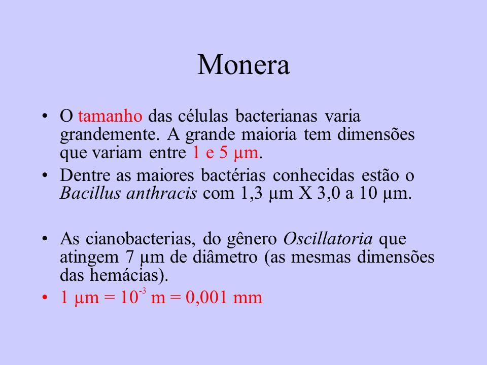 Monera O tamanho das células bacterianas varia grandemente. A grande maioria tem dimensões que variam entre 1 e 5 µm.