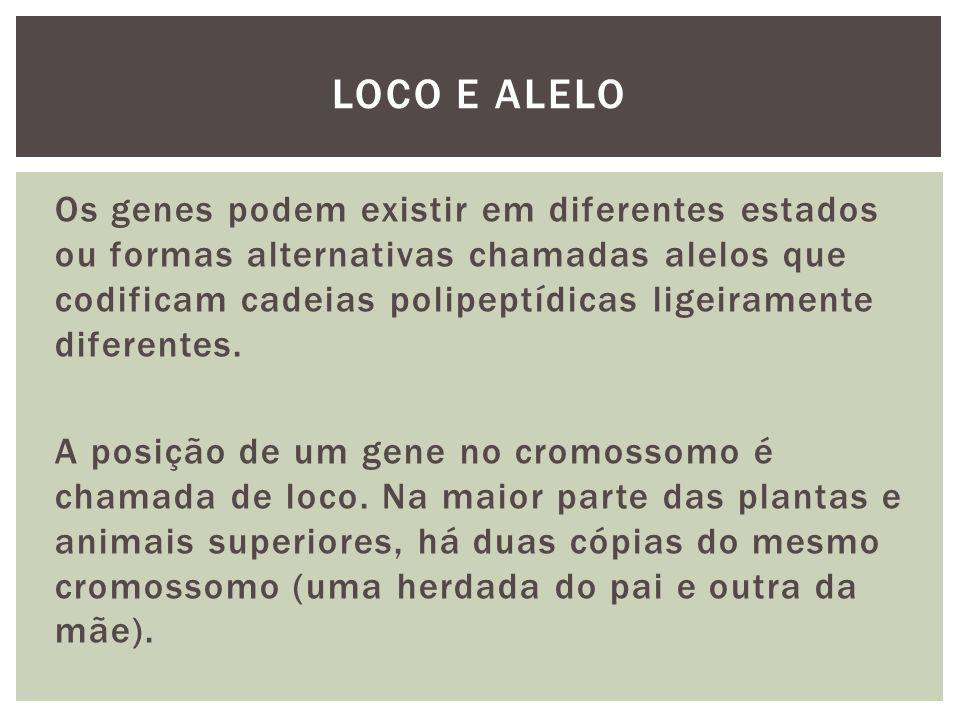 Loco e alelo
