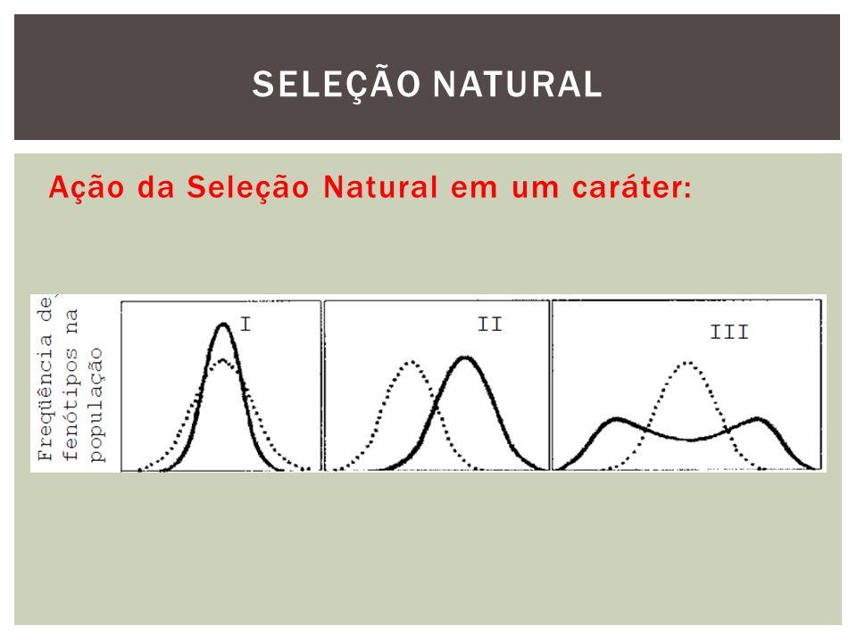 SELEÇÃO NATURAL Ação da Seleção Natural em um caráter: