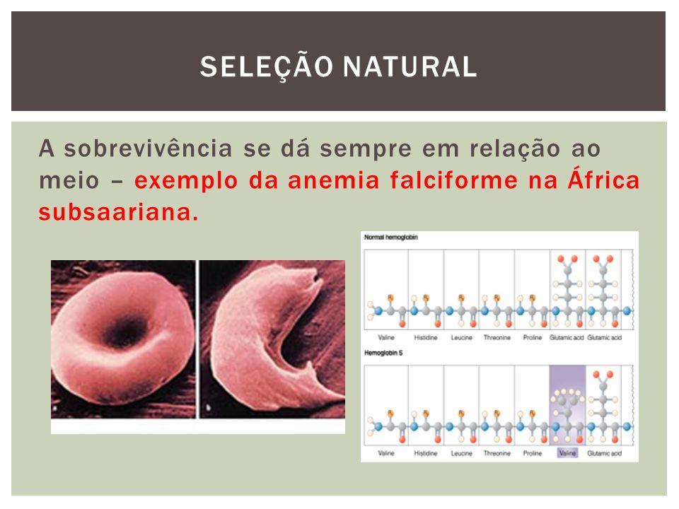 SELEÇÃO NATURAL A sobrevivência se dá sempre em relação ao meio – exemplo da anemia falciforme na África subsaariana.
