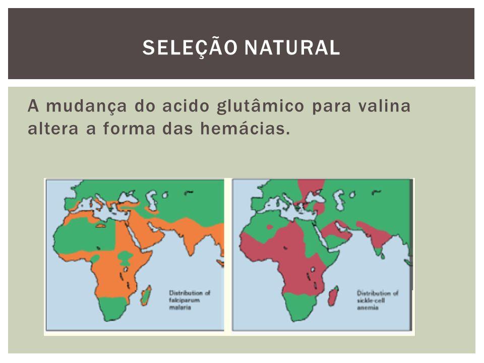 SELEÇÃO NATURAL A mudança do acido glutâmico para valina altera a forma das hemácias.