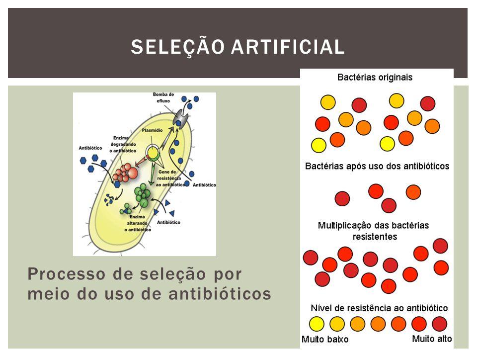 SELEÇÃO ARTIFICIAL Processo de seleção por meio do uso de antibióticos