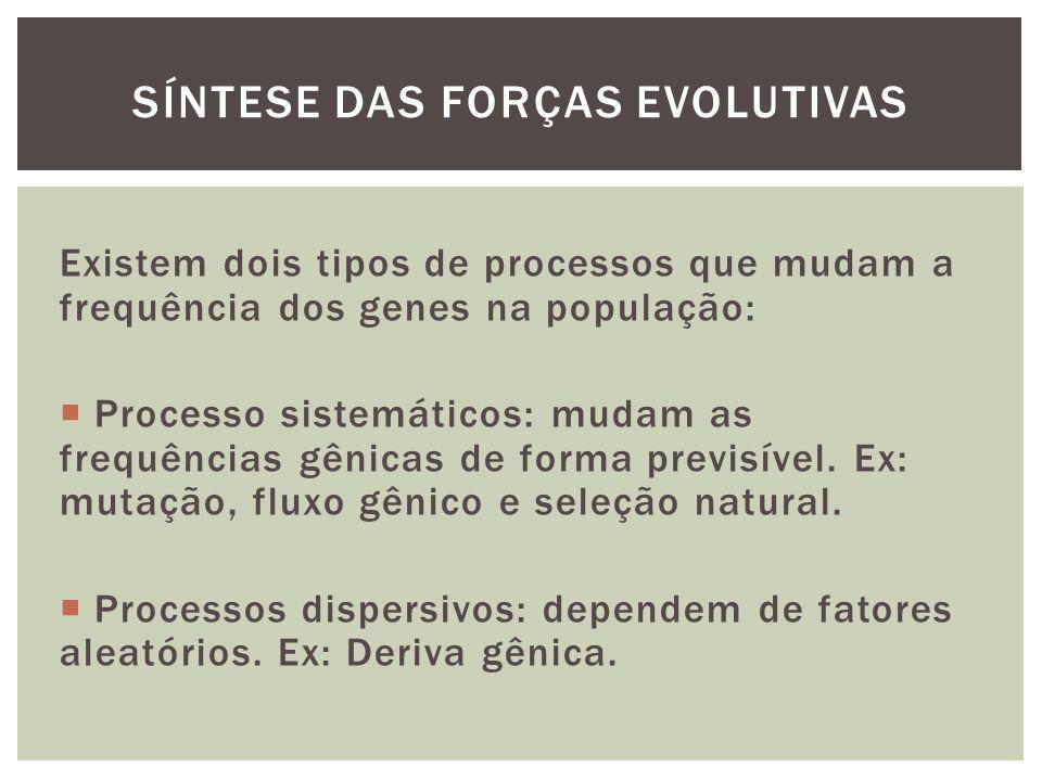 Síntese das forças evolutivas