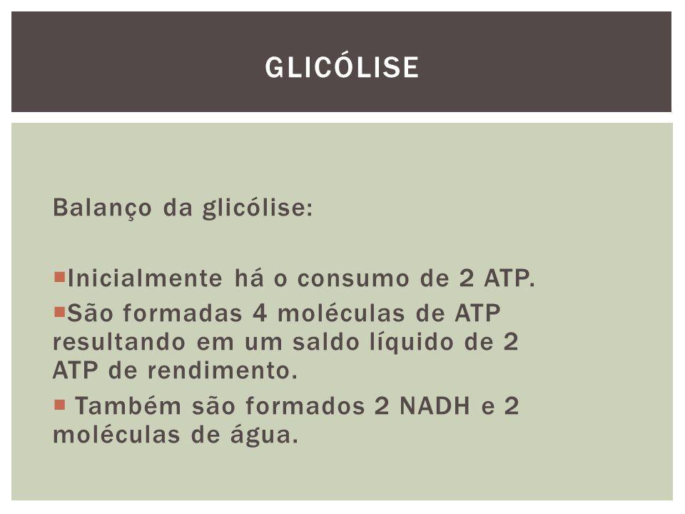 Glicólise Balanço da glicólise: Inicialmente há o consumo de 2 ATP.