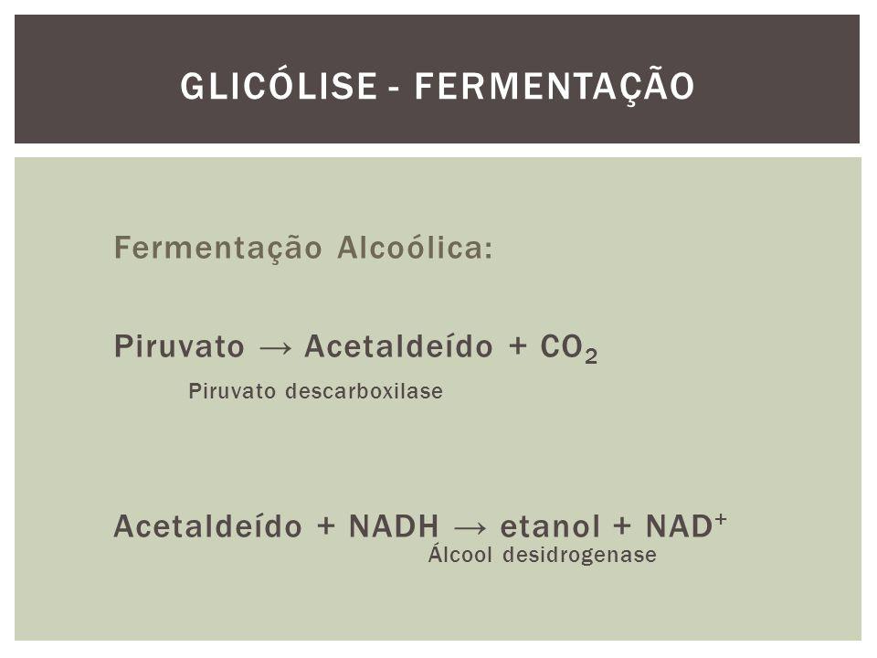 GLICÓLISE - FERMENTAÇÃO