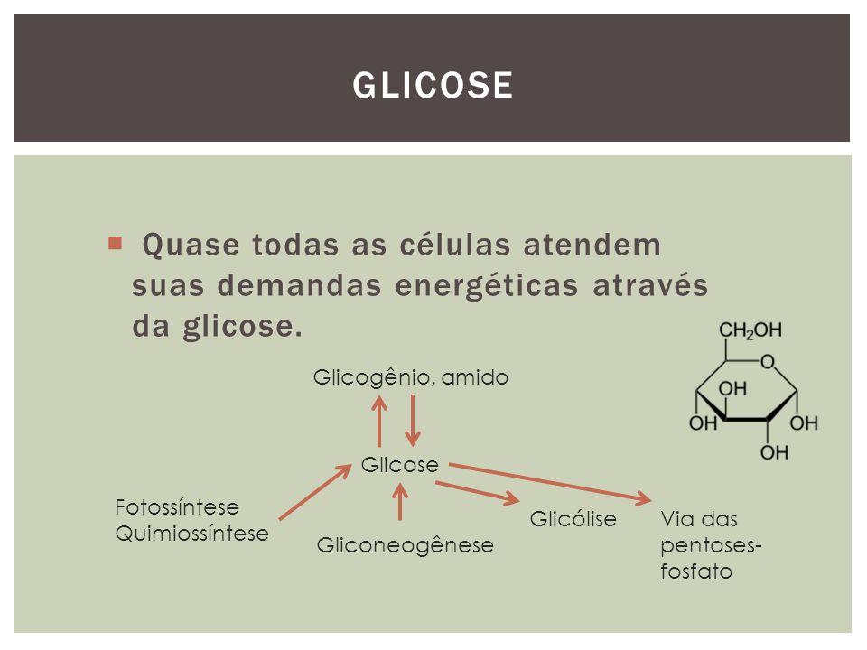 Glicose Quase todas as células atendem suas demandas energéticas através da glicose. Glicose. Glicogênio, amido.