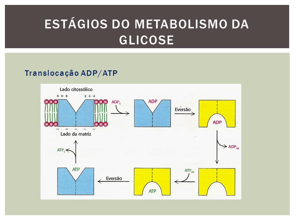 Estágios do metabolismo da glicose