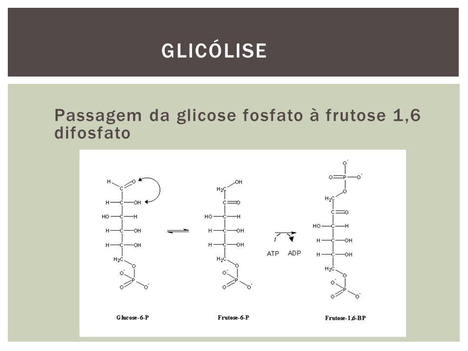 Glicólise Passagem da glicose fosfato à frutose 1,6 difosfato