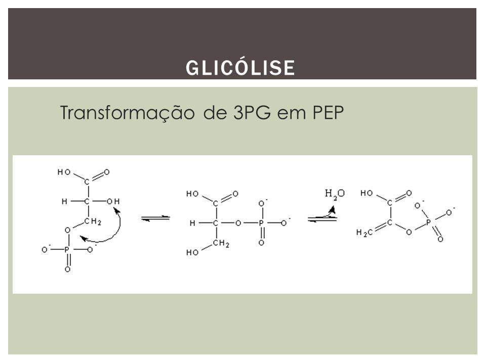 Glicólise Transformação de 3PG em PEP