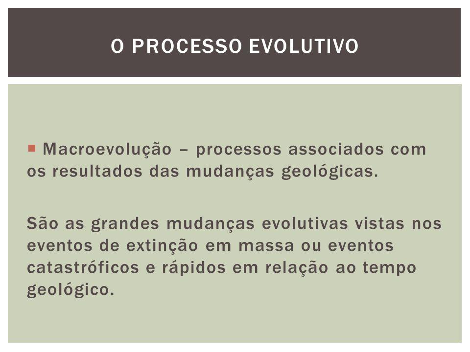 O processo evolutivo Macroevolução – processos associados com os resultados das mudanças geológicas.