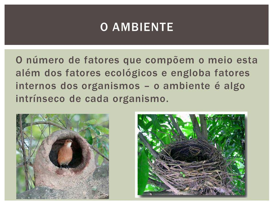 O ambiente