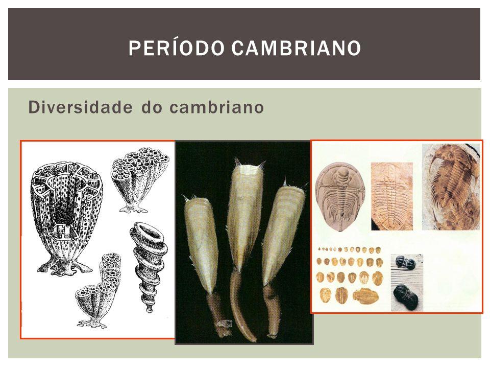 Período cambriano Diversidade do cambriano