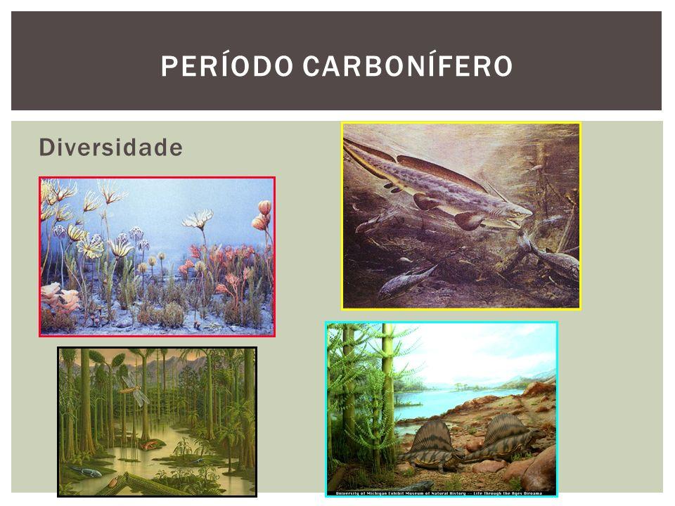 Período carbonífero Diversidade