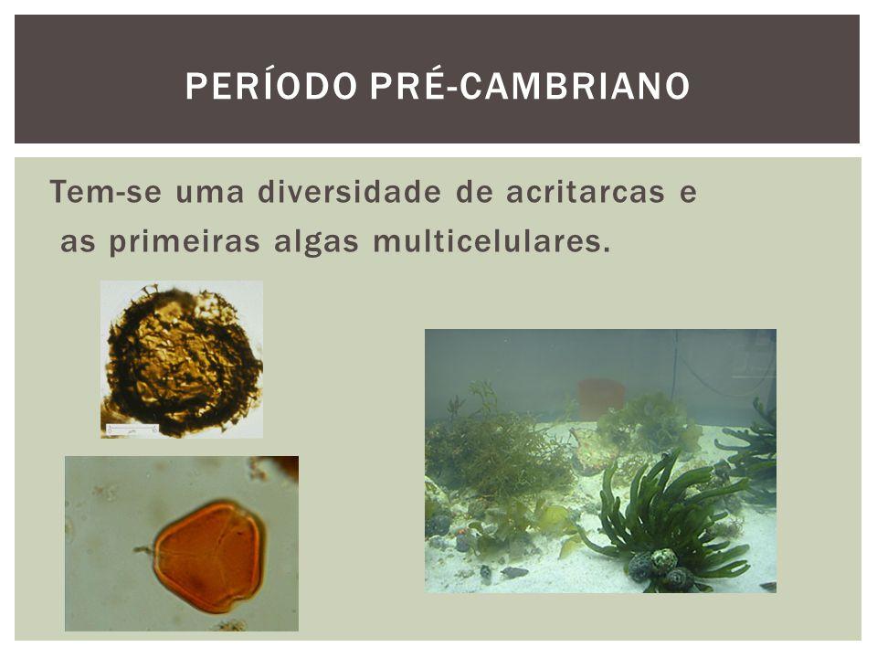 Período pré-cambriano