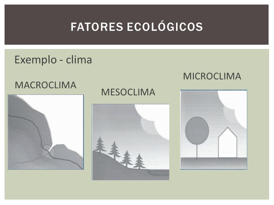 Fatores ecológicos Exemplo - clima MICROCLIMA MACROCLIMA MESOCLIMA