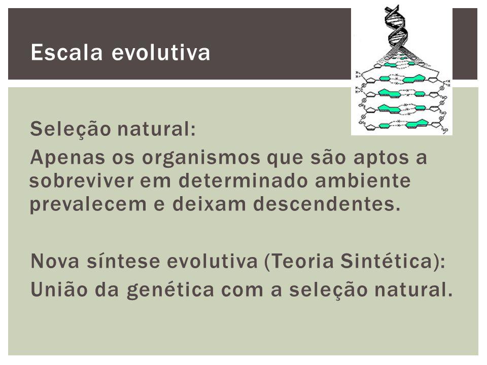 Escala evolutiva Seleção natural: