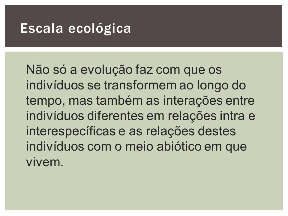 Escala ecológica