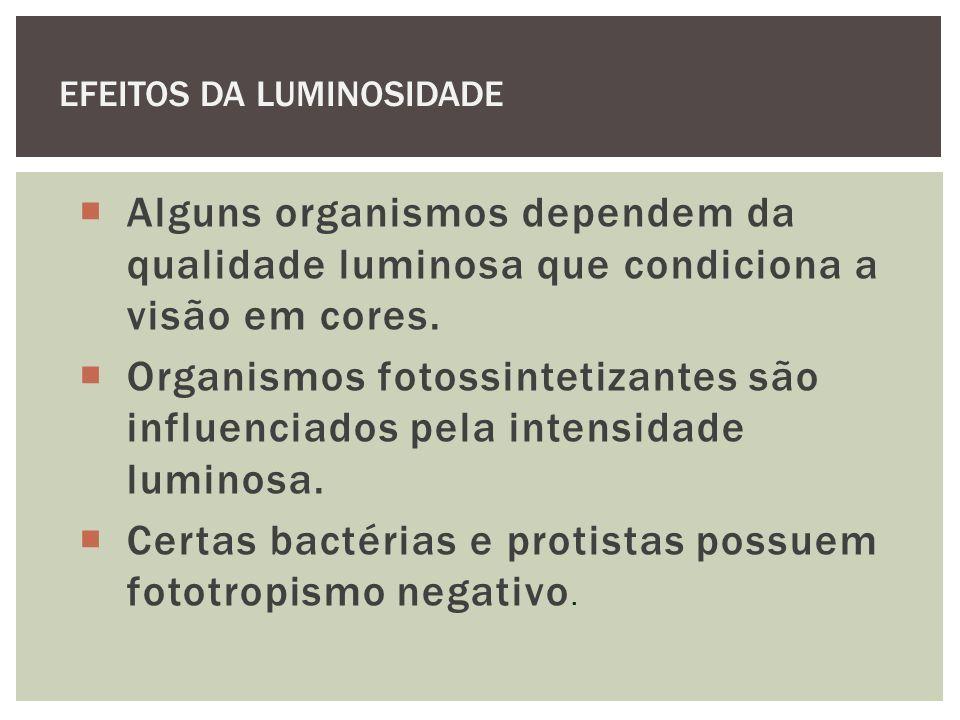 Certas bactérias e protistas possuem fototropismo negativo.