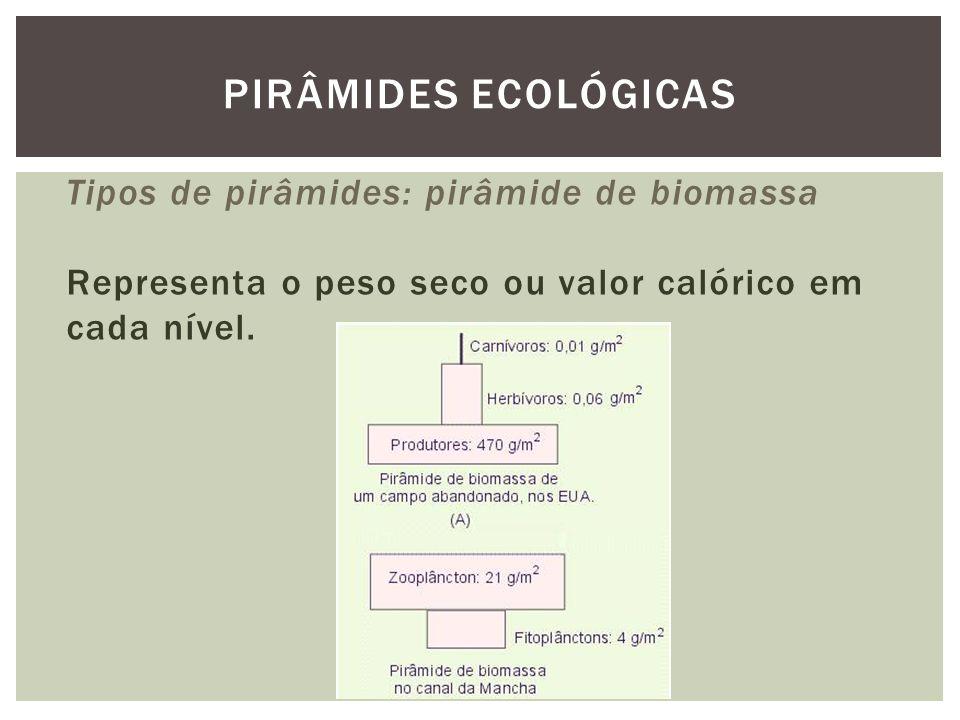 PIRÂMIDES ECOLÓGICAS Tipos de pirâmides: pirâmide de biomassa Representa o peso seco ou valor calórico em cada nível.
