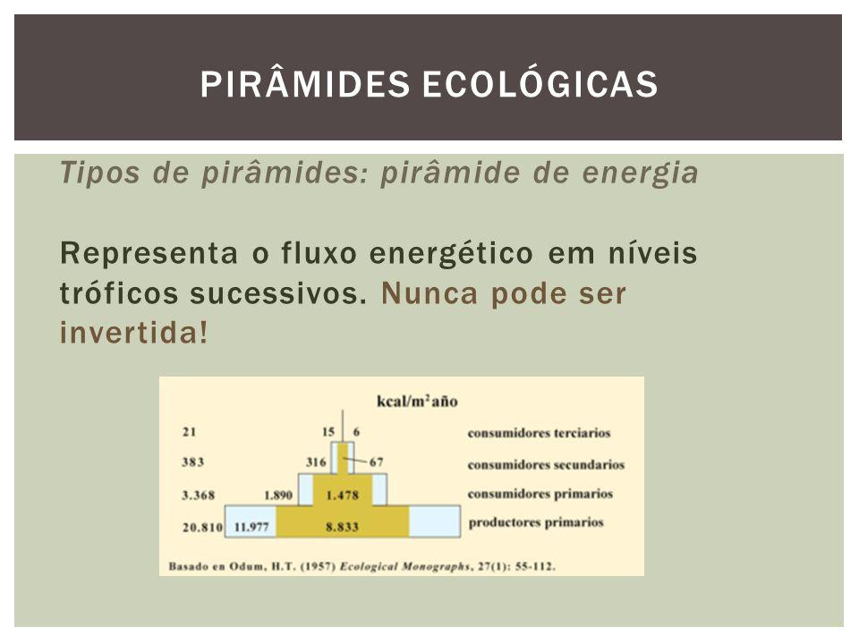 PIRÂMIDES ECOLÓGICAS Tipos de pirâmides: pirâmide de energia Representa o fluxo energético em níveis tróficos sucessivos.