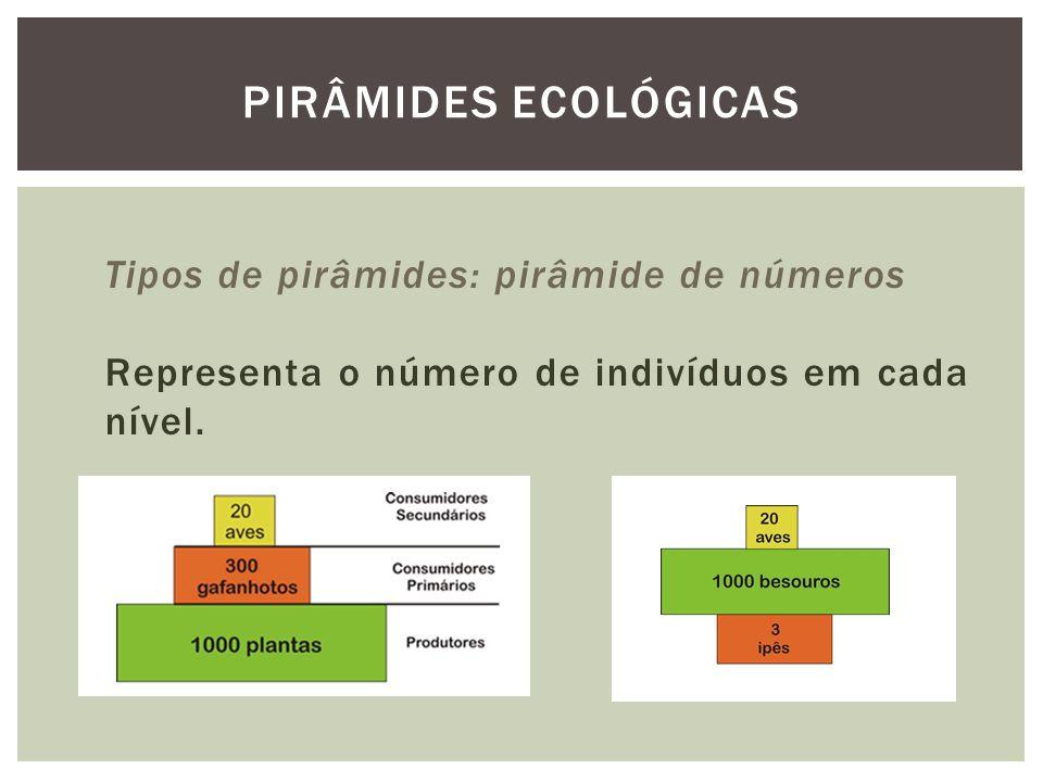 PIRÂMIDES ECOLÓGICAS Tipos de pirâmides: pirâmide de números Representa o número de indivíduos em cada nível.