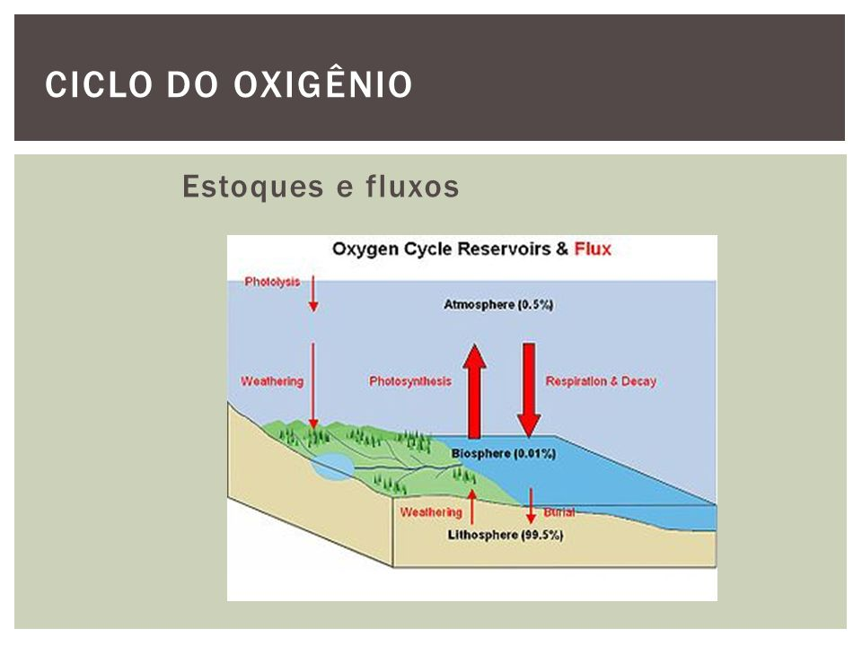 CICLO DO OXIGÊNIO Estoques e fluxos