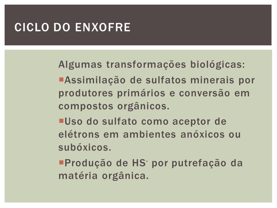 Ciclo do Enxofre Algumas transformações biológicas: