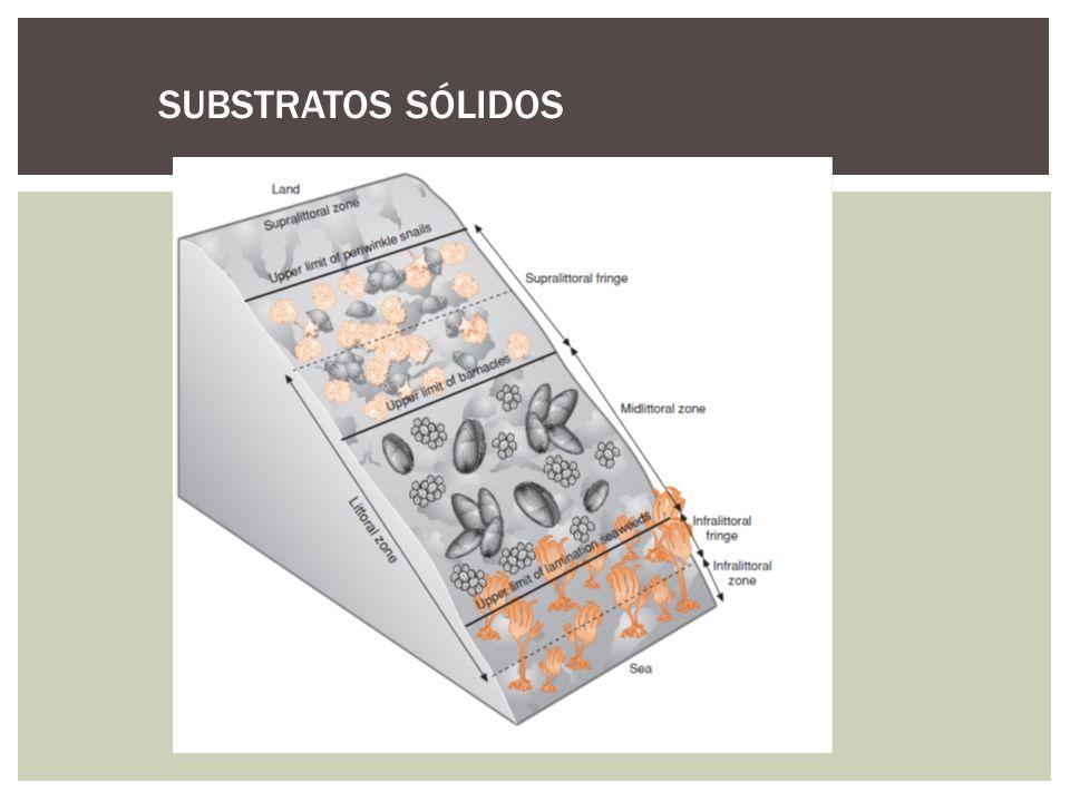 SUBSTRATOS SÓLIDOS