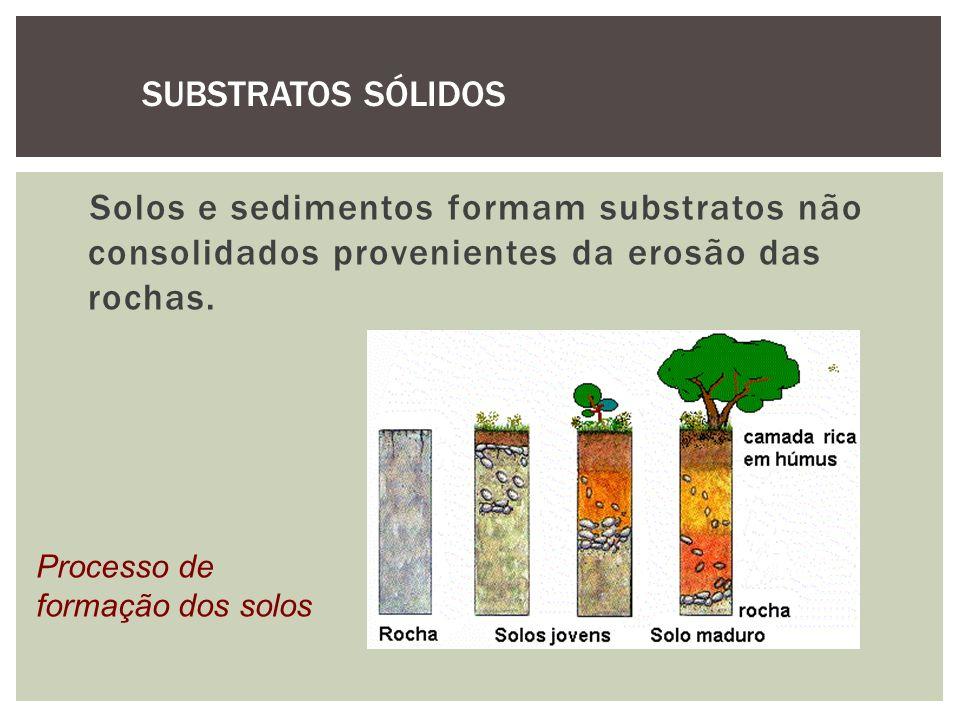 SUBSTRATOS SÓLIDOS Solos e sedimentos formam substratos não consolidados provenientes da erosão das rochas.