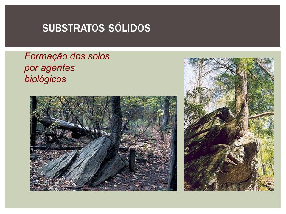 SUBSTRATOS SÓLIDOS Formação dos solos por agentes biológicos