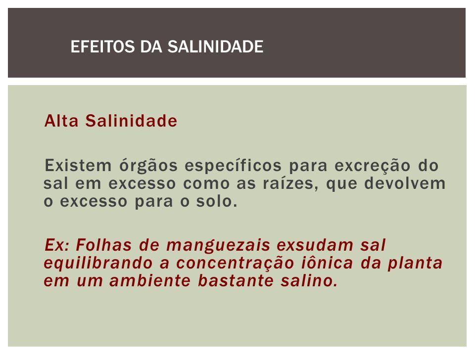 EFEITOS DA SALINIDADE