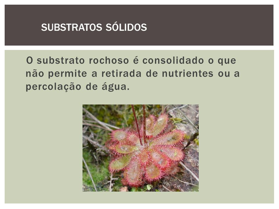 SUBSTRATOS SÓLIDOS O substrato rochoso é consolidado o que não permite a retirada de nutrientes ou a percolação de água.