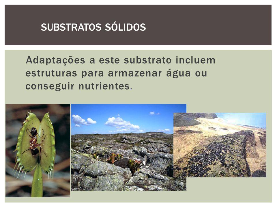 SUBSTRATOS SÓLIDOS Adaptações a este substrato incluem estruturas para armazenar água ou conseguir nutrientes.