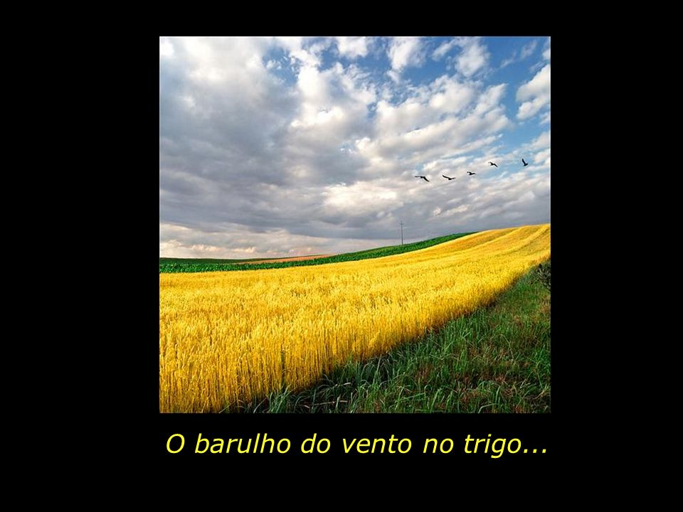 O barulho do vento no trigo...
