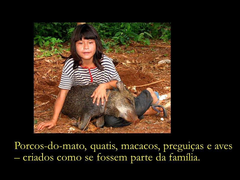 Porcos-do-mato, quatis, macacos, preguiças e aves