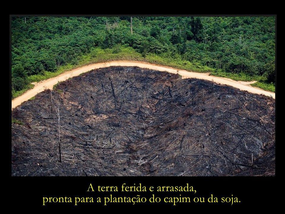 A terra ferida e arrasada,
