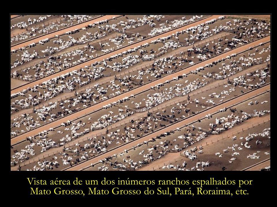 Vista aérea de um dos inúmeros ranchos espalhados por Mato Grosso, Mato Grosso do Sul, Pará, Roraima, etc.