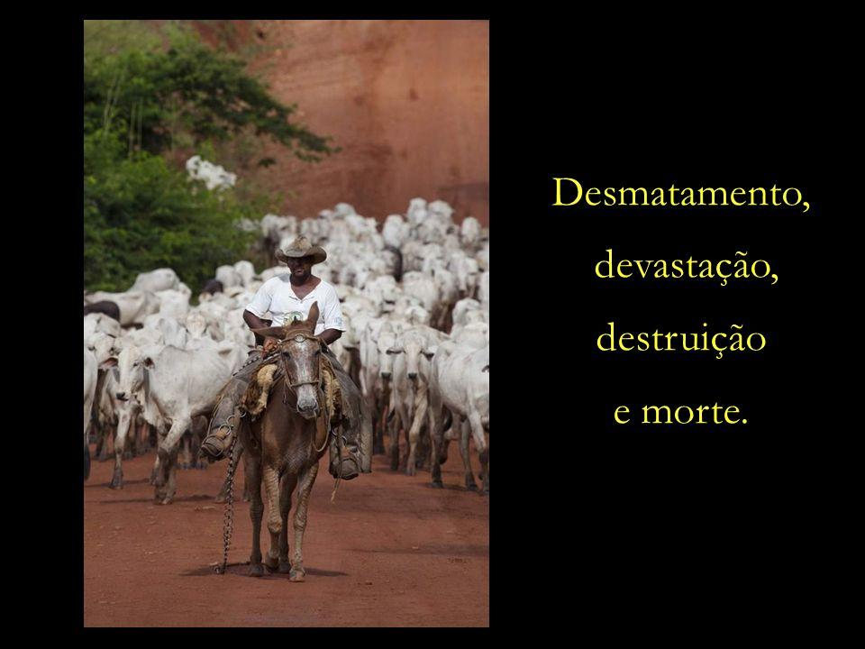 Desmatamento, devastação, destruição e morte.