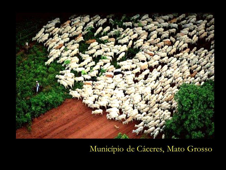 Município de Cáceres, Mato Grosso