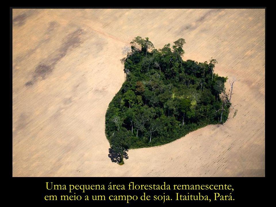 Uma pequena área florestada remanescente,