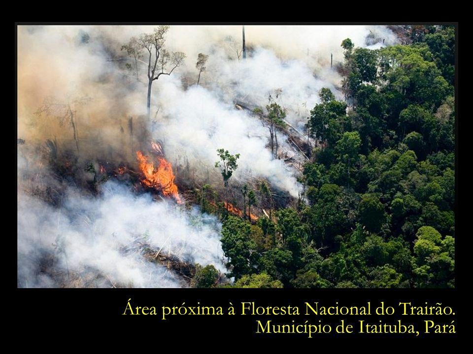Área próxima à Floresta Nacional do Trairão.