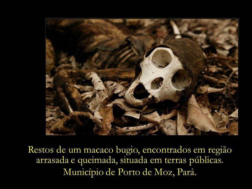 Município de Porto de Moz, Pará.