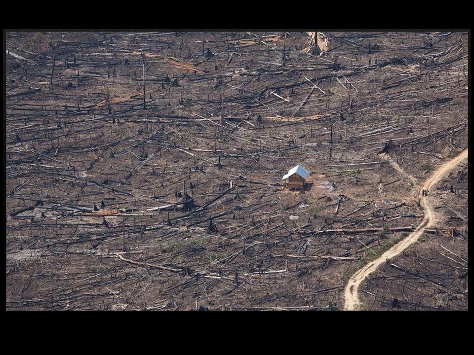 A devastação onde um dia havia verde.